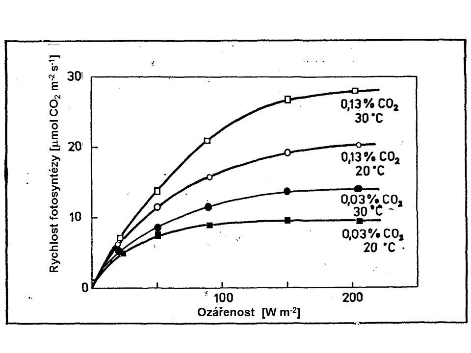 Rychlost fotosyntézy [mmol CO2 m-2 s-1]